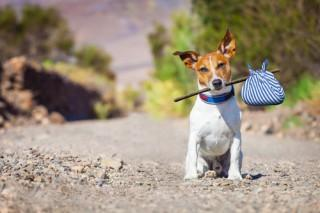 Pet Custody In Divorce | Who Gets The Pets?